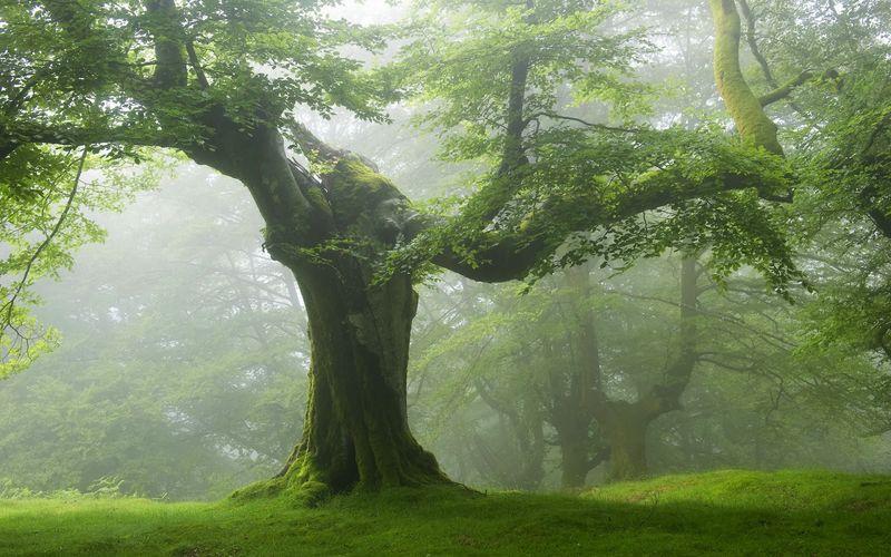 arbre-800x600