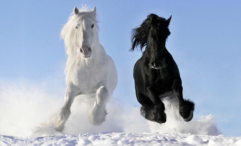 chevaux-800x600