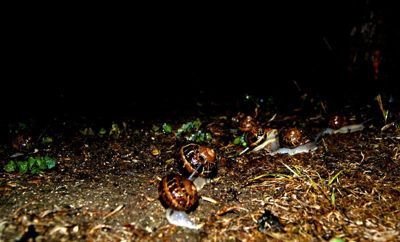 escargots-800x600