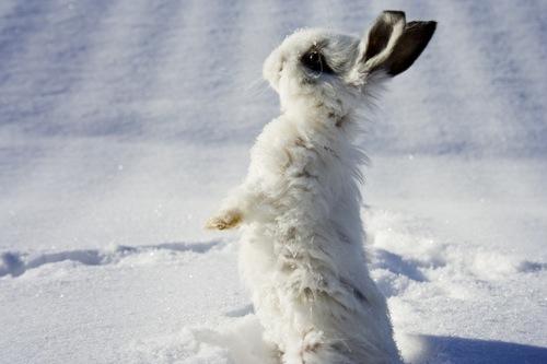 Bebe rabbit
