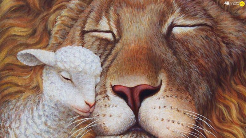 lion-agneau-800x600