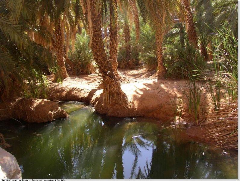 oasis-palmeraie-800x600