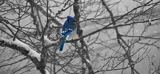 oiseau-arbre-hiver