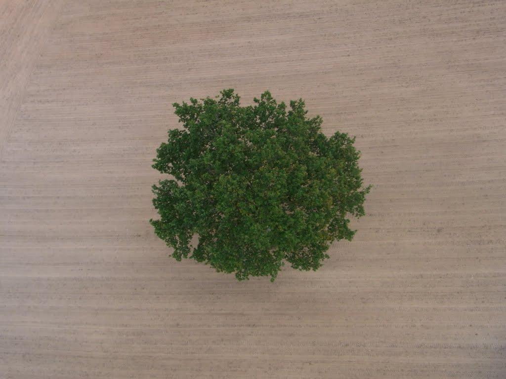 arbre-ciel-44