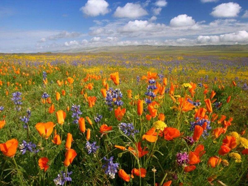 champs-de-fleurs-800x600