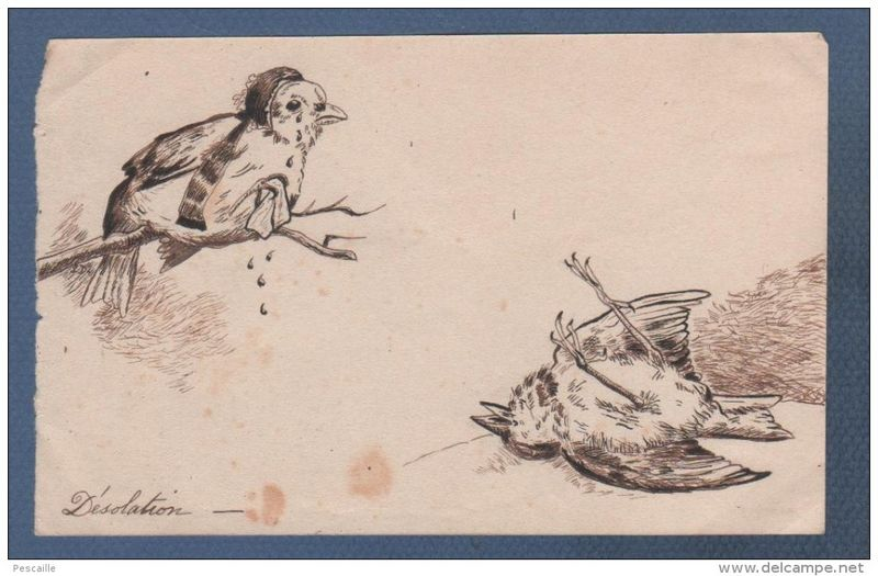 desolation-oiseau-mort-1-800x600