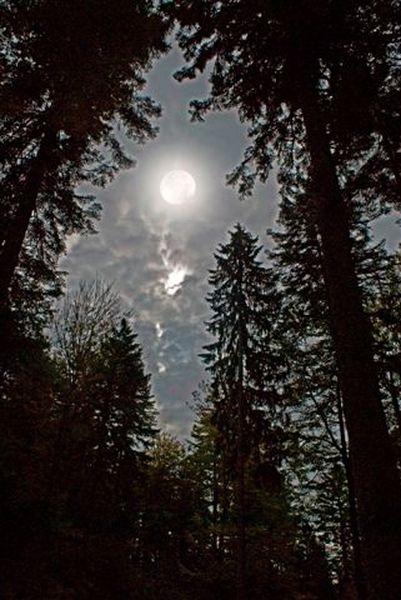 pleine-lune-clairiere-800x600